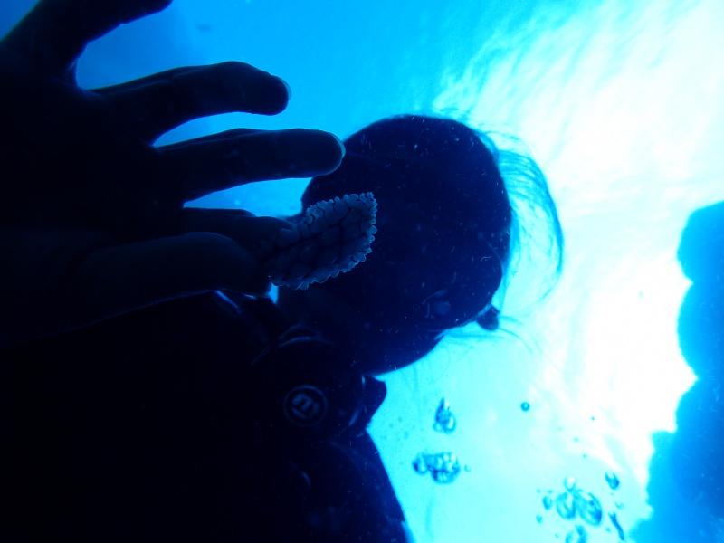 P7160966 サンゴ&デバ。ダイビング!