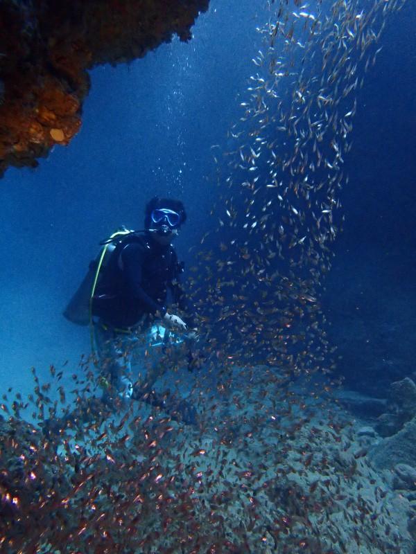 P7160982 e1500211036156 サンゴ&デバ。ダイビング!