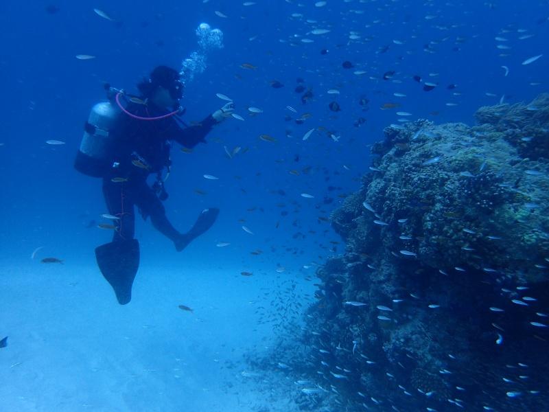 P7161037 サンゴ&デバ。ダイビング!