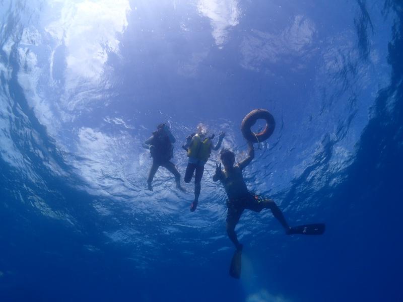 P7302072 七月終わり。ダイビング!