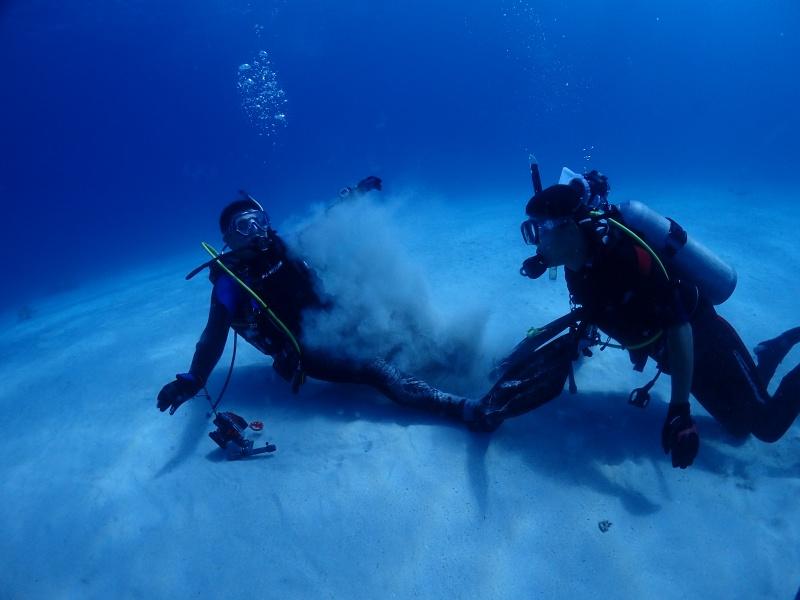 P9030466 近年一番の謎。ダイビング!