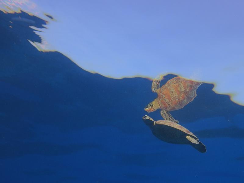 P9190125 風穏やかに。ダイビング!