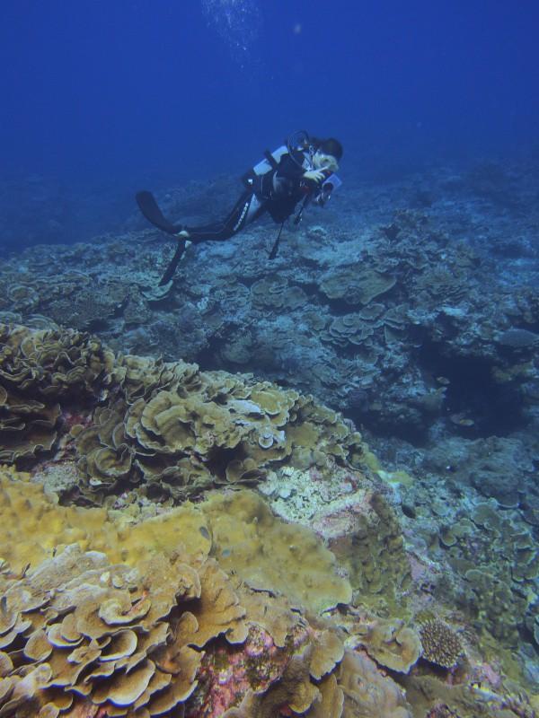P9210238 e1505993759471 珍しい細かいの。ダイビング!