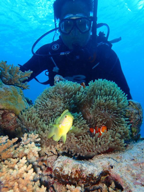 P9241740 e1506417723330 魚が寄る寄る。ダイビング!