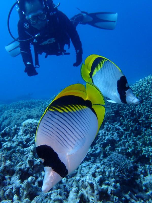 P9241755 e1506417992832 魚が寄る寄る。ダイビング!