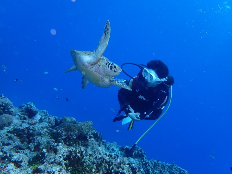 P9251902 魚が寄る寄る。ダイビング!