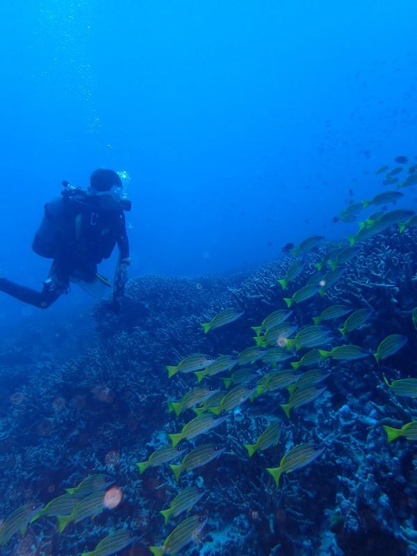 P9261932 e1506419298723 魚が寄る寄る。ダイビング!