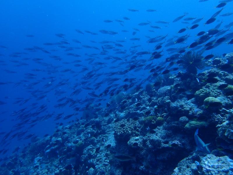 P9261952 魚が寄る寄る。ダイビング!