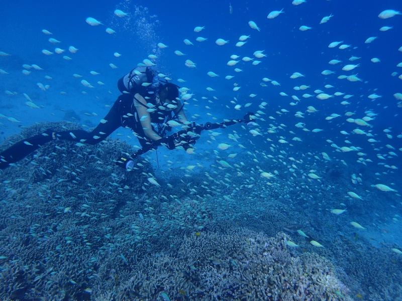P9261984 魚が寄る寄る。ダイビング!