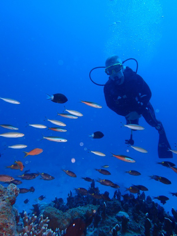 PA012375 e1506857588525 Sunny! Diving!